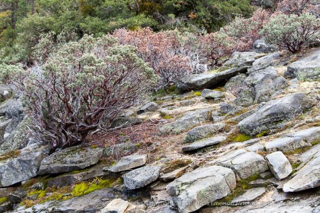 Yosemite_Rocks_&_Plants,_3.1.14