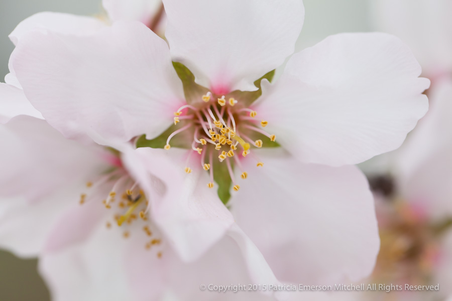 Blossoms_(II),_2.18.14