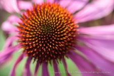 Echinacea Center, 12.18.14