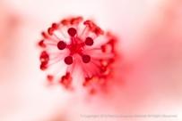 Hibiscus Detail, 12.10.15