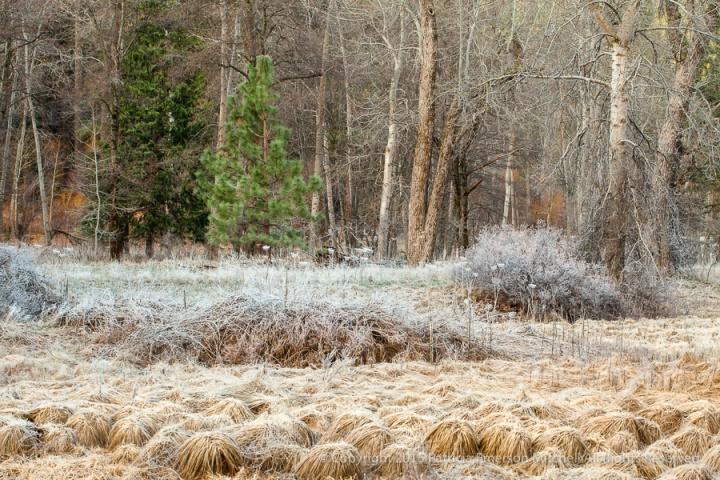Yosemite-_Grasses,_Shrubs_&_Trees,_3.1.15