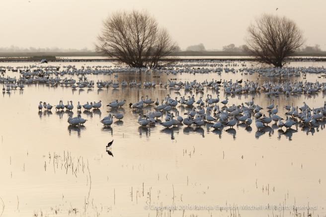Birds_on_the_pond,_2.14.14
