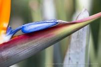 Blue_Bird,_2.18.15