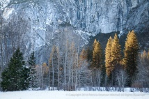 Snow, Trees, Rock, 12.31.15