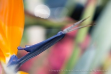 Unsharp Bird, 2.18.15