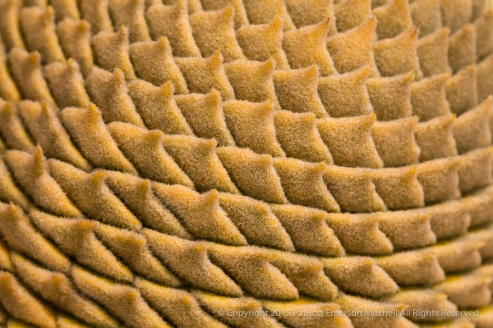 First_Shot-_Cycas_revoluta,_5.13.15