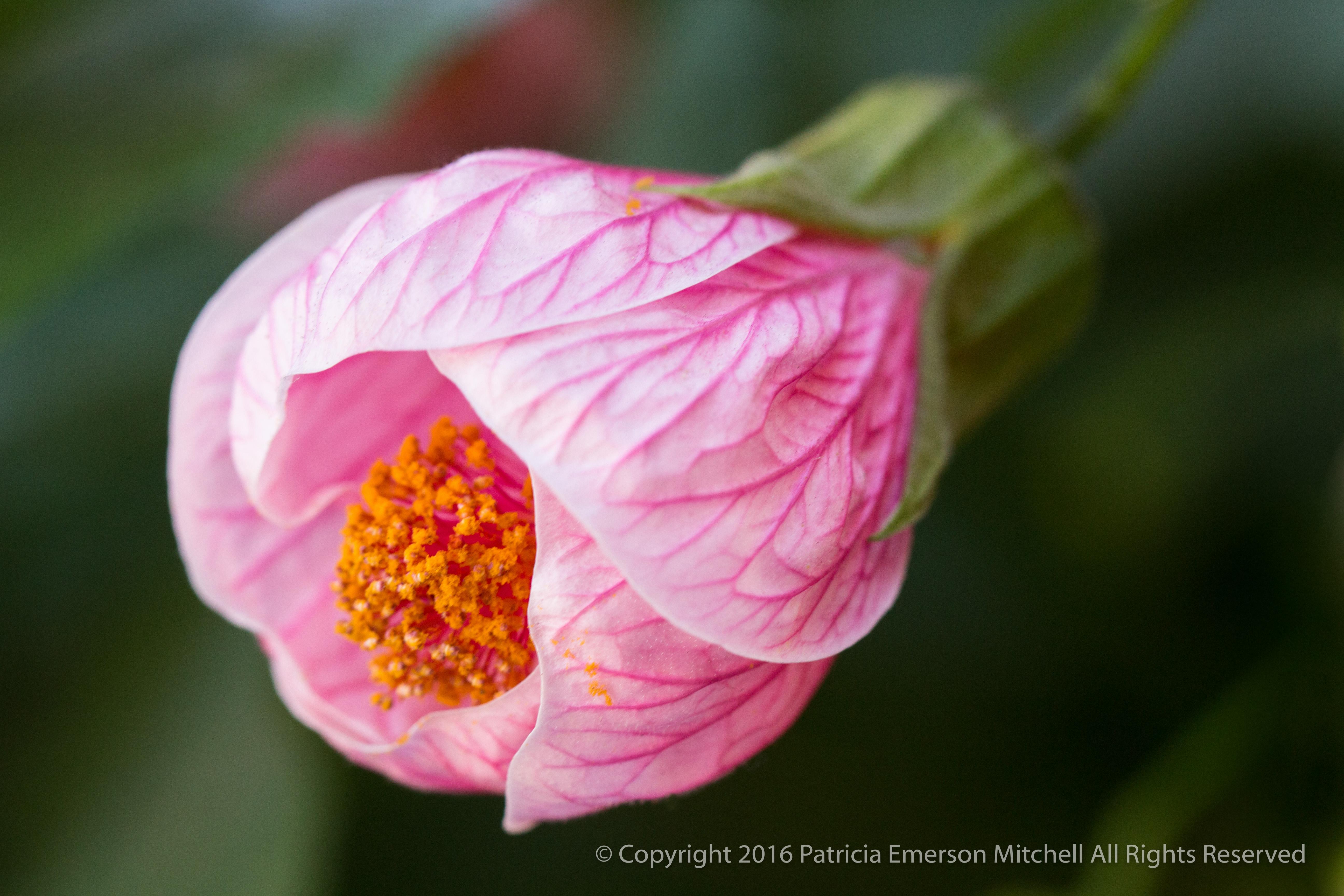 Goodnight Flower Patricia Emerson Mitchell