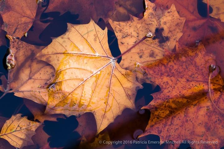 Gutter_Leaves_(I),_10.17.16.jpg