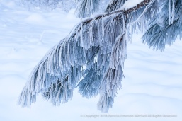 snow_and_a_branch_12-31-16