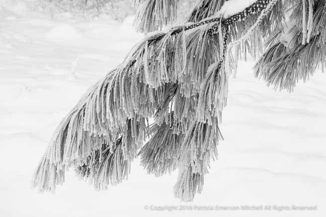 Snow_and_a_Branch_(B&W),_12.31.16.jpg