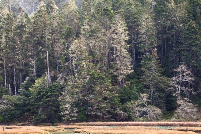 Mendocino-_Trees_&_Water_(I),_11.19.16.jpg