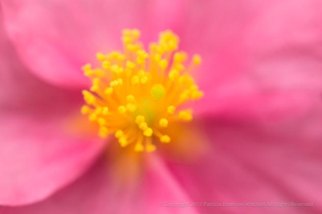 Unsharp-_Pink_&_Yellow,_3.18.16.jpg