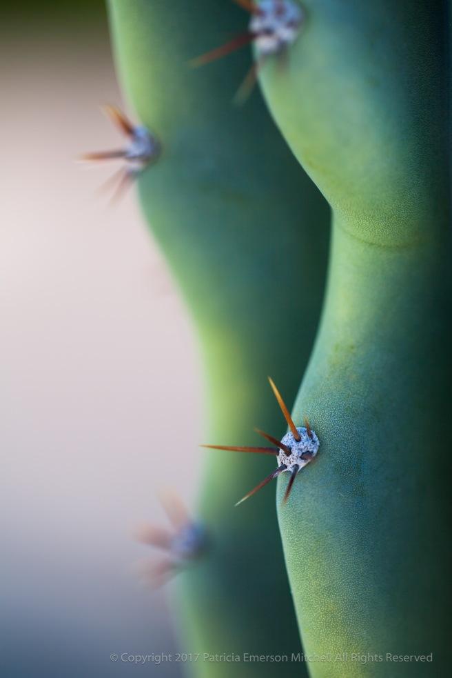 Succulent_Green_&_Needles,_2.16.15.jpg