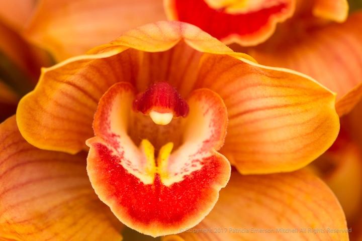 First_Shot-_Orchid,_4.25.17.jpg