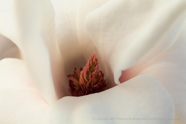 Magnolia,_1.23.14.jpg