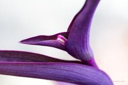 Purple on White, 9.11.13