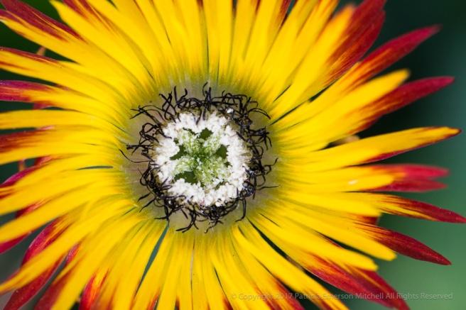 Red,_Yellow,_Black,_White_&_Green,_5.3.17.jpg