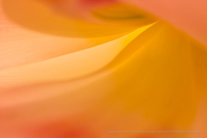 Tulip Wave (I), 4.4.17), 4.4.17