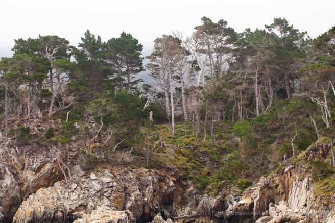 Point_Lobos_Rocks_&_Trees,_7.18.17.jpg