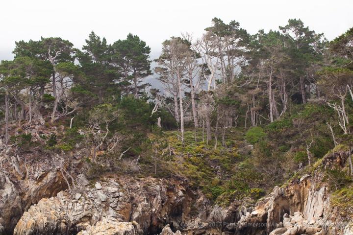 Point_Lobos_Rocks_&_Trees,_7.18.17.jpg