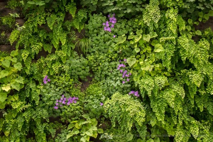 Green_&_Purple_at_SFMoma,_5.6.16.jpg
