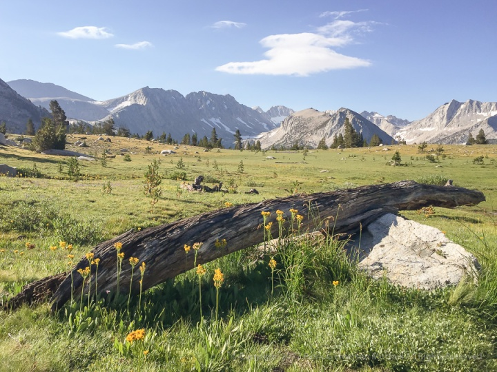 Log_&_Rock,_Meadow_&_Mountains,_9.1.17.jpg