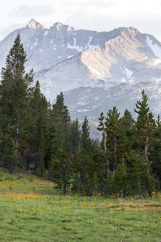 Meadow,_Trees_and_Mountain,_9.1.17.jpg
