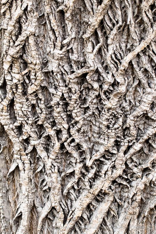 Tree_Bark,_9.20.17.jpg