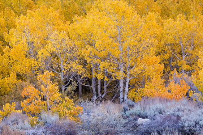 Brush_&_Aspens,_10.9.17.jpg