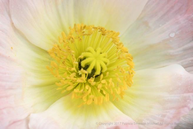 Poppy,_11.10.17.jpg