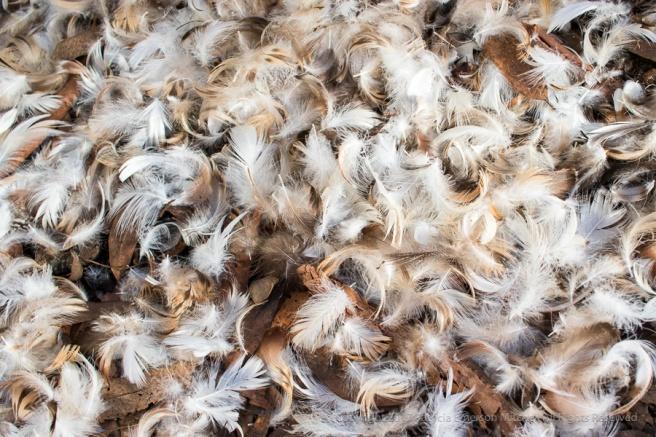 Tree_Feathers,_12.6.17.jpg