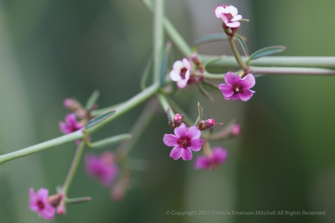 Tiny_Succulent_Flowers,_11.28.14.jpg