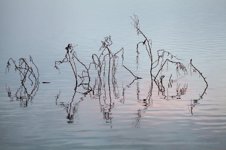 Morning_on_the_Pond,_7-22_AM,_1.1.17.jpg