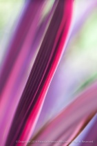 Cordyline Abstract, 10.3.14