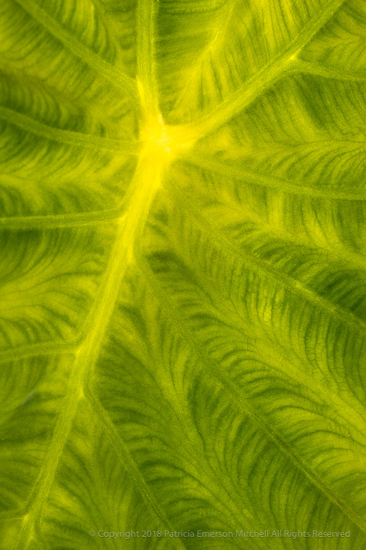 Sun_through_Green,_1.23.18.jpg