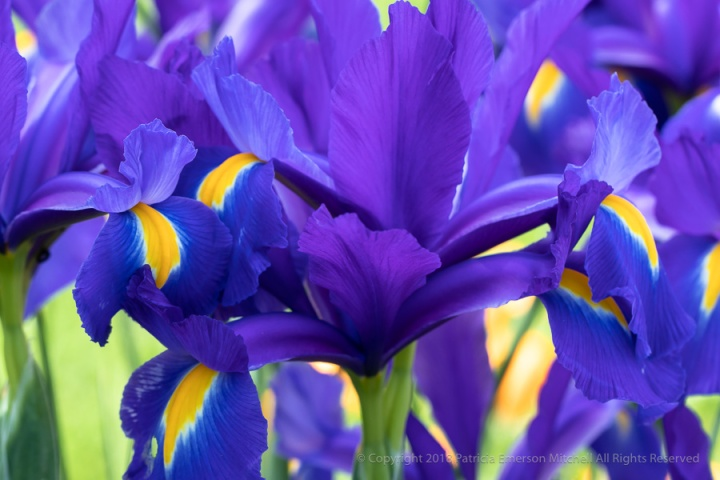 Purple,_Yellow_&_Green,_4.9.18.jpg