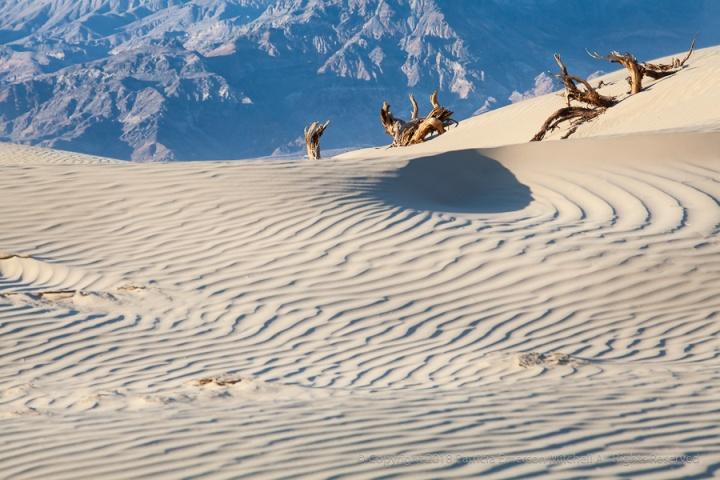 Sand,_Wood,_Mountains,_3.26.18.jpg