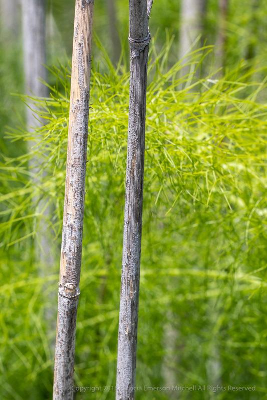 Little_Forest_(I),_5.7.18.jpg