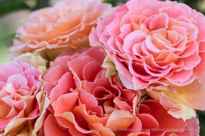 Rose_Bouquet,_5.2.18.jpg