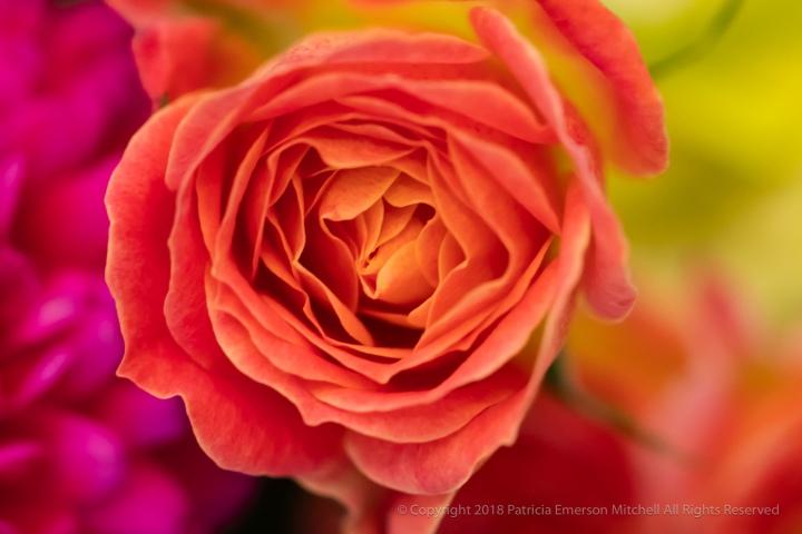 Kathy's_Flowers,_6.2.18.jpg
