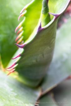 Succulent Detail, 4.25.18