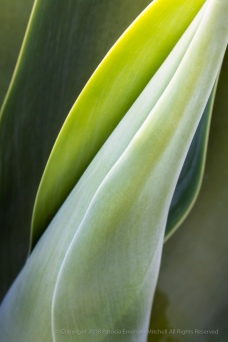 Succulent Green, 6.8.18
