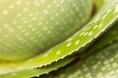 Succulent Spots & Spine, 11.7.16