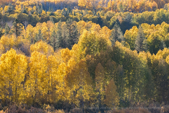Evening Sun_on_Aspens_&_Evergreens,_10.8.17.jpg