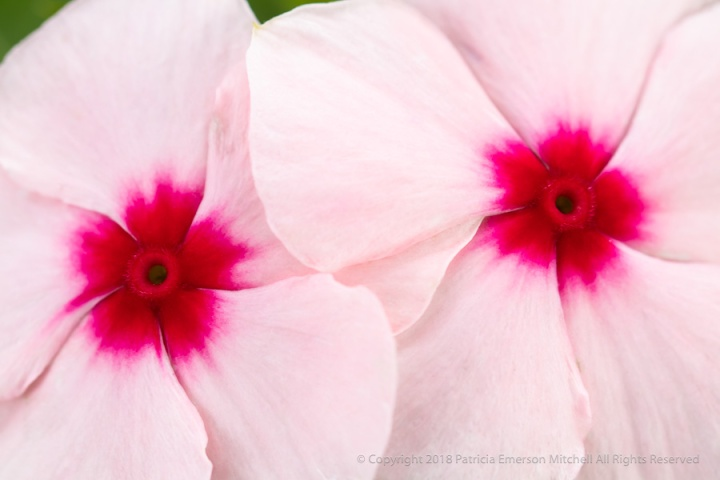 Impatiens_Friends,_10.1.18.jpg