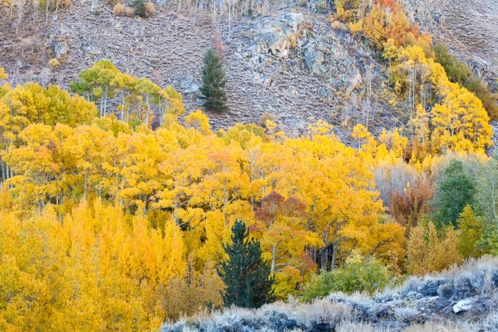 Autumn_in_the_Eastern_Sierra,_10.9.17.jpg