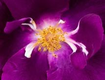 Purple, White, Yellow, 5.3.18