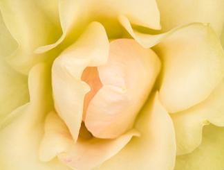 Sheila MacQueen Rose (IV), 4.21.16