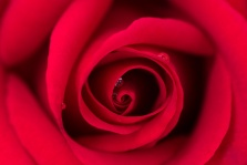 Red Rose with Water Drops, 5.5.17