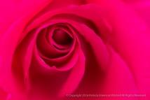 All My Loving Rose, 6.6.16